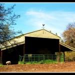 Papa's Barn