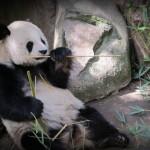 Dear Panda Express