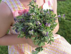 alfalfa bouquet